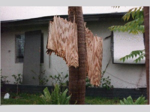 wind damage from Hurricane Andrew