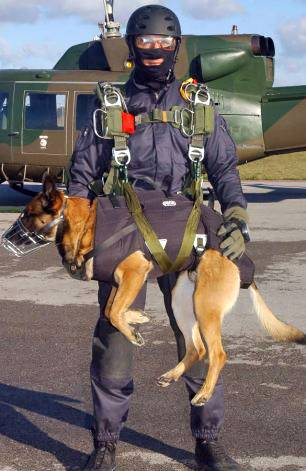 SEAL Cairo military working dog