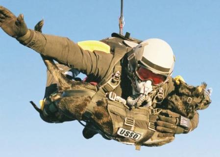 SEAL dog Cara jump