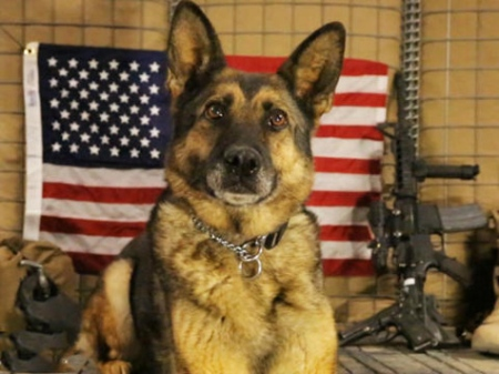 AP Glory Hounds special on military working dogs