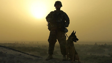 Glory Hounds special on military working dogs or MWDs