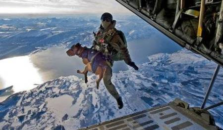 military working dog jump out of aircraft