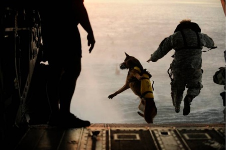 military working dogs = no fear