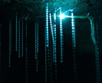 glowworms