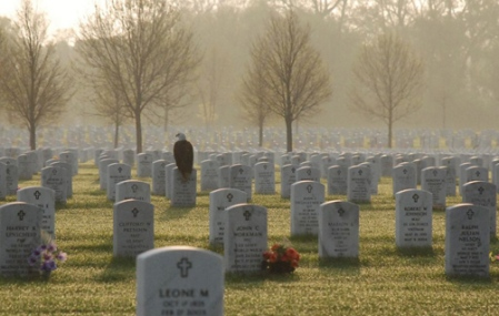 Frank Glick photo of eagle on headstone at Fort Snelling National Cemetery