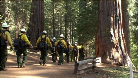 rim-fire-nps-fire-crews