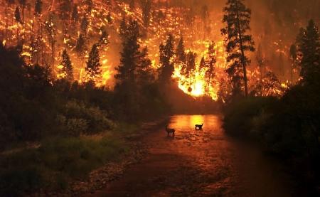 wildfire-USFS