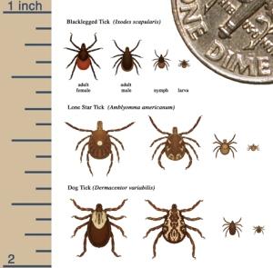 tick_sizes