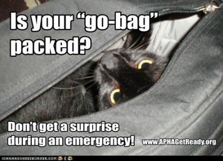 APHA-go bag cat