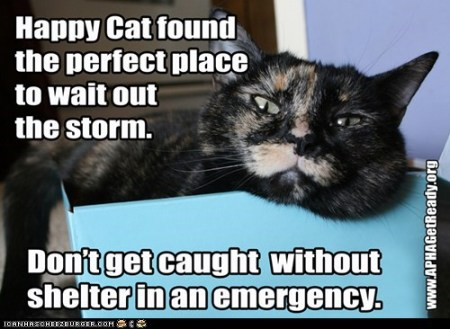 APHA-happy cat shelter
