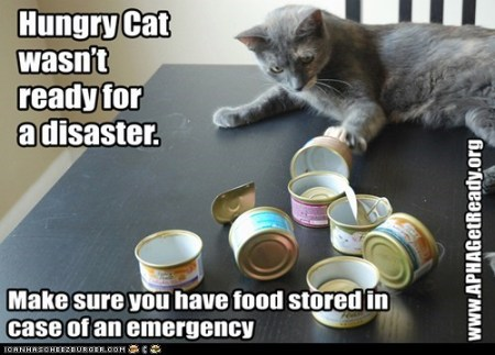 APHA-Hungry Cat