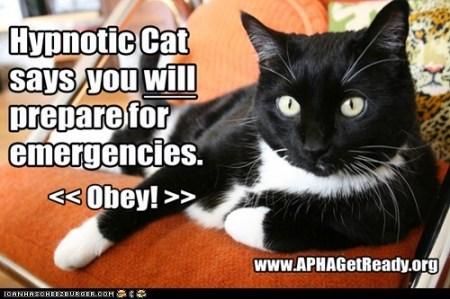 APHA-hypnotic cat