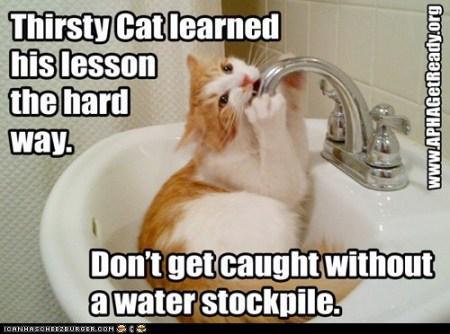 APHA-Thirsty Cat