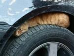 winter-tips-pets-cat-ck2