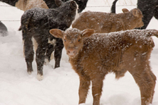 winter-tips-pets-livestock4