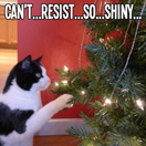 winter-tips-pets-tinsel-by-petflow